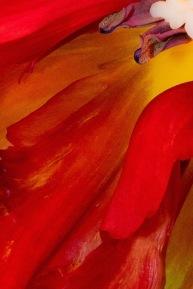 Variegated tulip #3